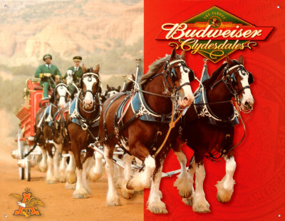 Budweiser Clydesdales Christmas Wallpaper Budweiser-clydesdales